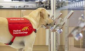 """AGM followed by Baiju McCubbins  on """"Medical Detection Dogs"""" (Zoom)"""